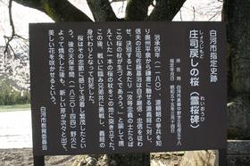 20140419sakura3.jpg